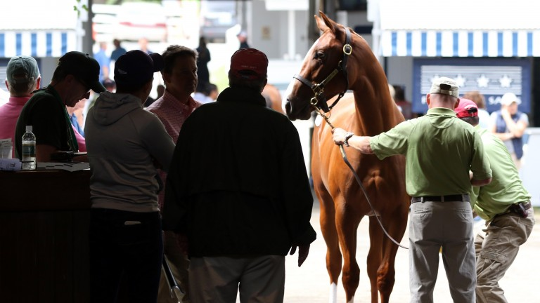 Key market metrics at the Keeneland September Yearling Sale are ahead of last year