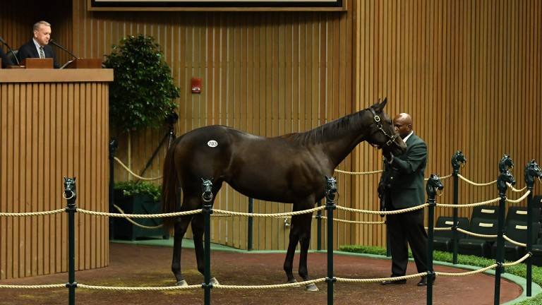 Hip 703: the Uncle Mo filly bought by Godolphin for $1.1 million