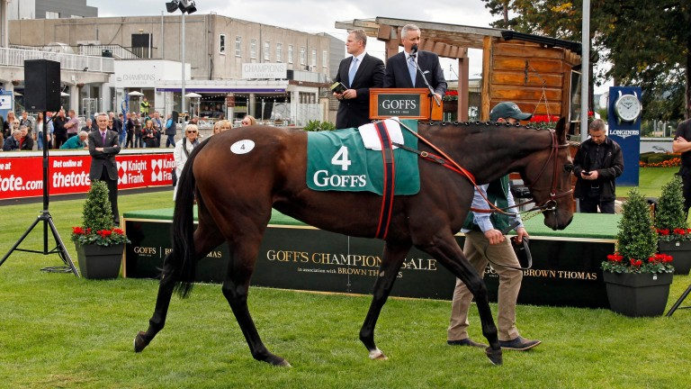 Cimeara selling for a record €500,000 at the Goffs Champions Sale