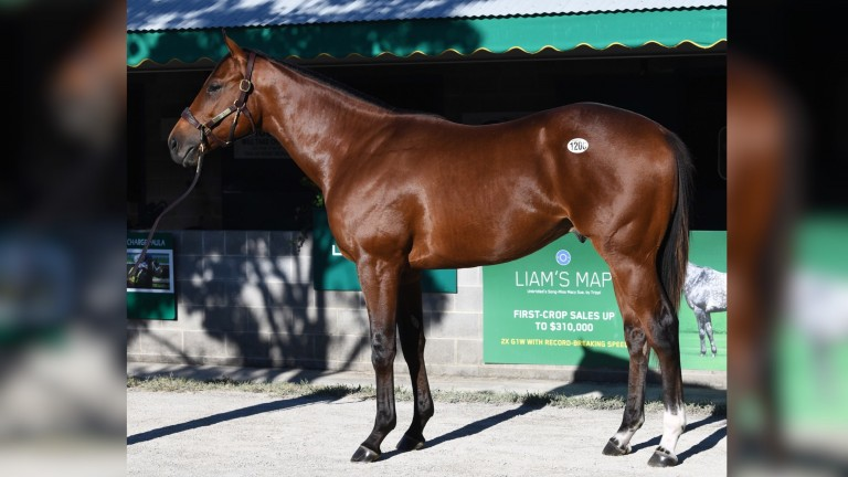An Uncle Mo colt named Wall Street Lion brought $1 million