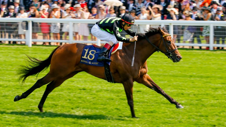 Lady Aurelia winning the 2017 King's Stand Stakes at Royal Ascot