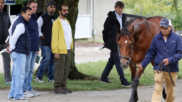 Sheikh Mohammed (yellow) and his team inspect a yearling on the Keeneland sales grounds