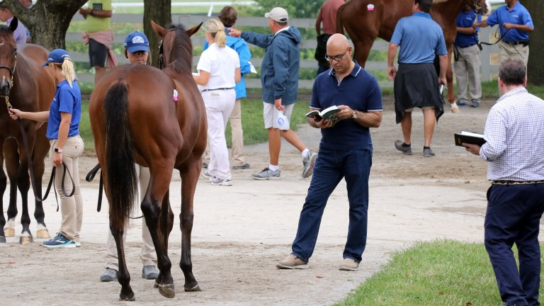 Phoenix Thoroughbreds founder Amer Abdulaziz studies his catalogue