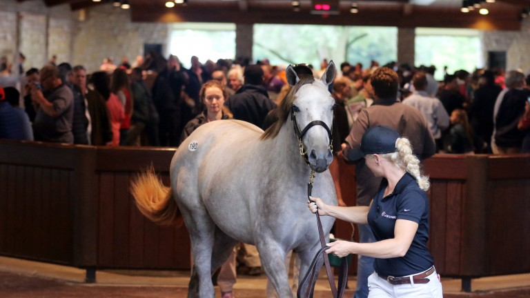 Hip 190: a striking daughter of Tapit in the walking ring before fethcing $500,000 from Whisper Hill Farm