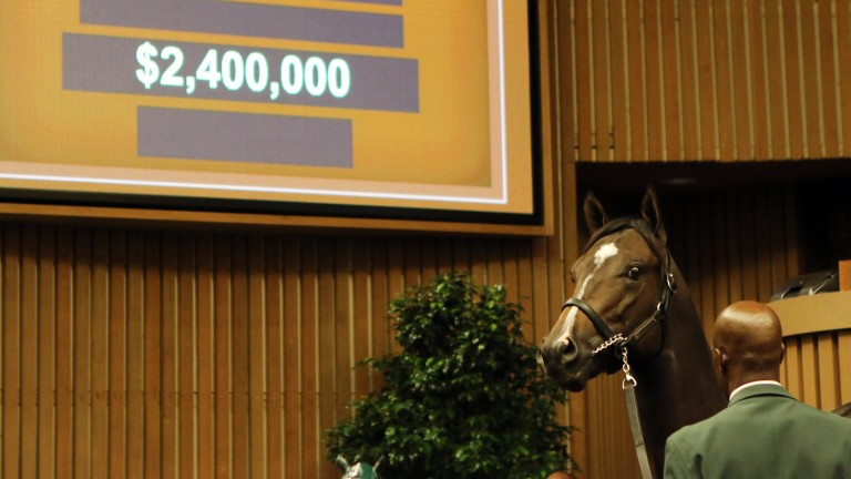 Hip 458: the War Front colt out of the Grade 1 winner Streaming lights up the bid board at $2.4 million when bought by Coolmore's MV Magnier