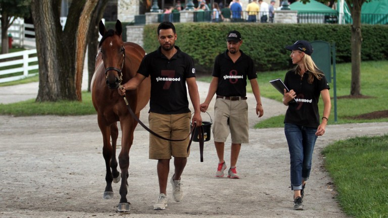 Glennwood Farm's Tanya Gunther (right) oversees hip 984, a filly by Uncle Mo, as she makes her way to the ring, where the youngster was bought by Courtlandt Farm for $875,000