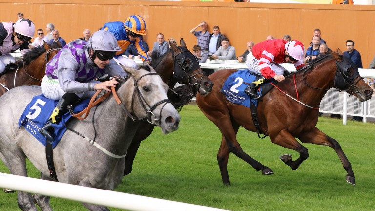 Son Of Rest (right): chased home Havana Grey in the Group 1 Flying Five