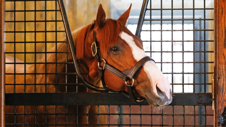 Justify in his new home, the stall formerly occupied by Giant's Causeway