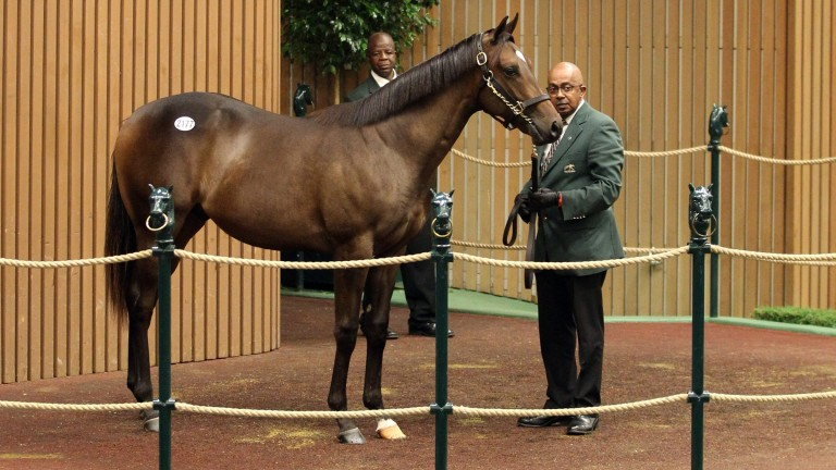 Hip 2177: the Empire Maker colt who fetched $450,000 on Monday