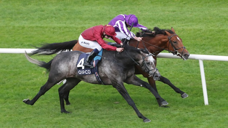 Roaring Lion (near): won his third Group 1 in the Irish Champion Stakes last weekend