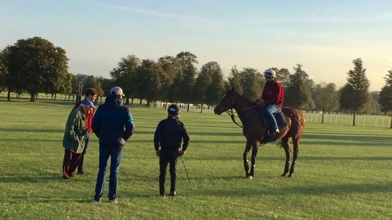 Pretty Pollyanna is surveyed by left to right Bill Gredley, Tim Gredley, Michael Bell and Silvestre de Sousa after her workout