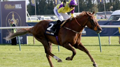 Brando wins the 2016 Ayr Gold Cup under top weight