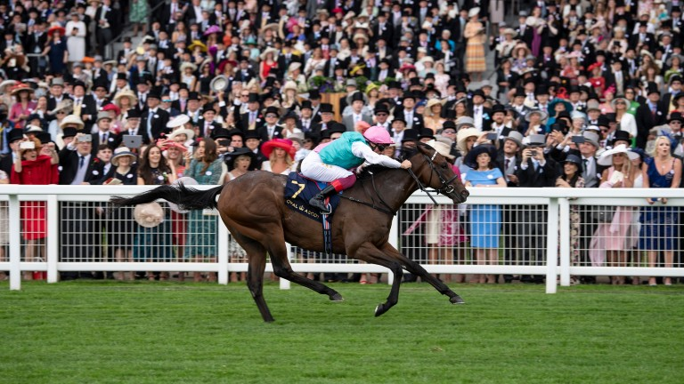 Kingman's son Calyx lands the Coventry Stakes