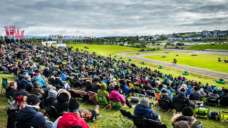 A large crowd at Landsmott 2018 enjoy a show class. Most attending will bring their own deck chairs and rugs