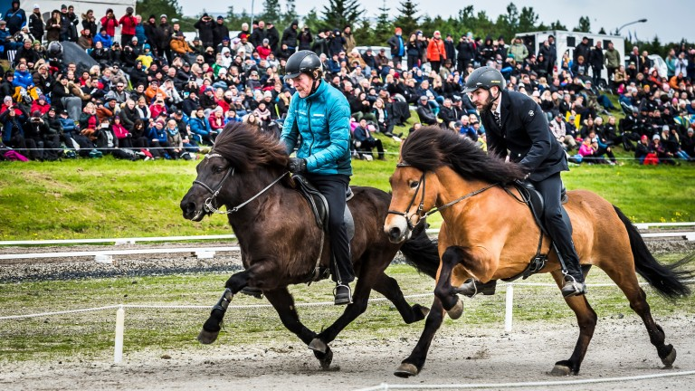 Sigurbjorn 'Diddi' Bardarson and Vokull fra Tunguhalsi (left) upsides Arni Bjorn Palsson and Dalvur fra Horni. Although Dalvur has broken pace and will be disqualified he can be kept alongside the other horse and rider to help them achieve a better time