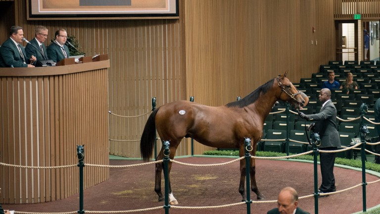 The third session of the Keeneland November Breeding Stock Sale saw 231 horses sell for $33.9 million