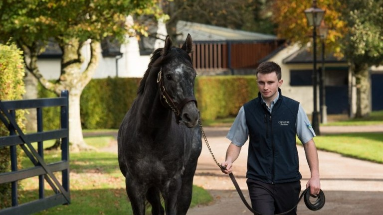 Caravaggio: brilliant sprinter is a son of late sire sensation Scat Daddy