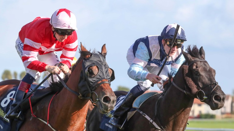 Neck and neck! Son Of Rest and Baron Bolt could not be separated in the Ayr Gold Cup