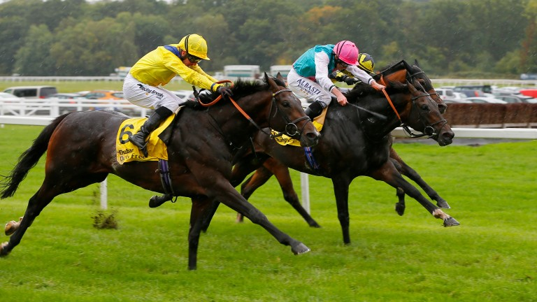 Young Rascal returned to action with a win at Newbury last month