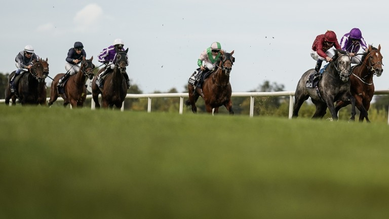 Study Of Man (extreme left) and Stephane Pasquier on their way to fifth place in the Irish Champion Stakes last Saturday