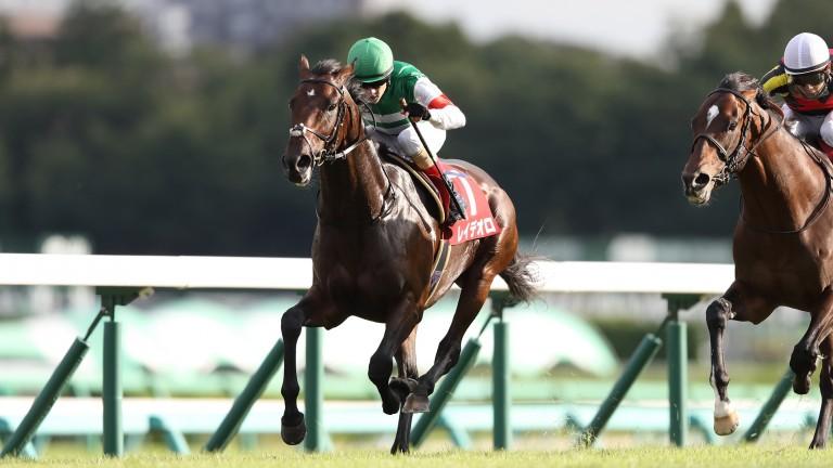 Rey De Oro powers to victory at Nakayama