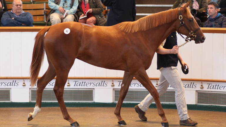 Mary Somerville in the Tattersalls sales ring before bringing a winning bid of 800,000gns from Godolphin