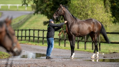 Santini at Nicky Henderson's owners daySeven Barrows, Lambourn 23.9.18 Pic: Edward Whitaker