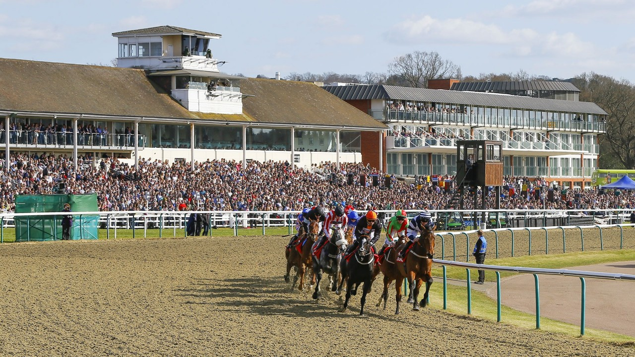 Lingfield all-weather leads the way after Catterick and