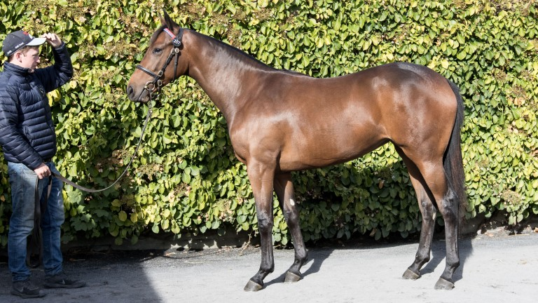 Lot 257: the Dark Angel filly out of Bear Cheek