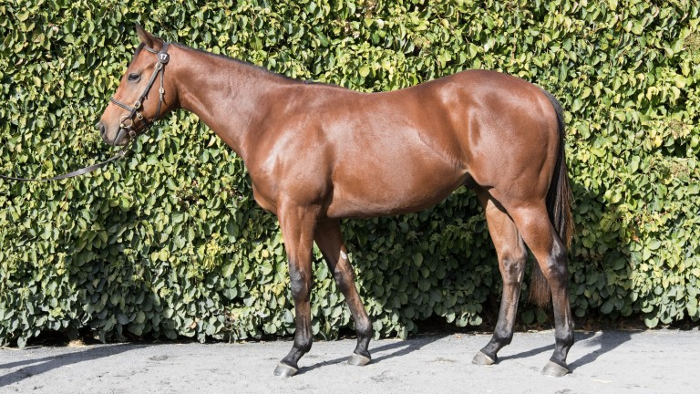 Lot 17: the Gleneagles colt out of One Chance
