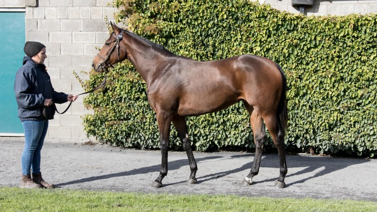 Lot 140: the Sea The Stars filly out of Star Mon Amie