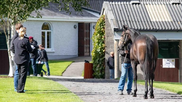 Inspections on the Tattersalls Ireland sales ground