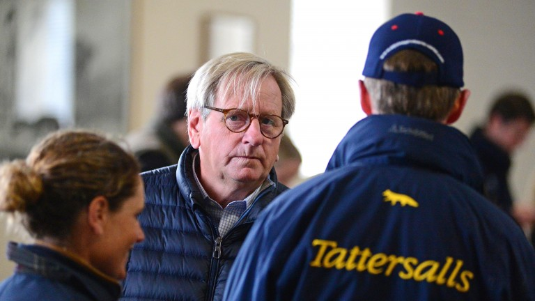 "Anthony Stroud: ""this colt is a good example of what the sire can get"""