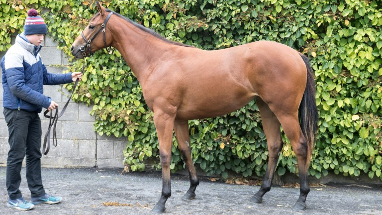 Lot 502: the Hallowed Crown half-sister to La Pelosa