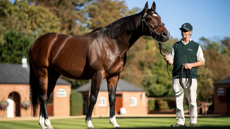 Frankel: stood at a fee of £175,000 this year