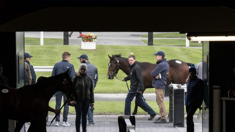 Tattersalls Ireland: the September Yearling Sale saw an increased catalogue but decreased aggregate