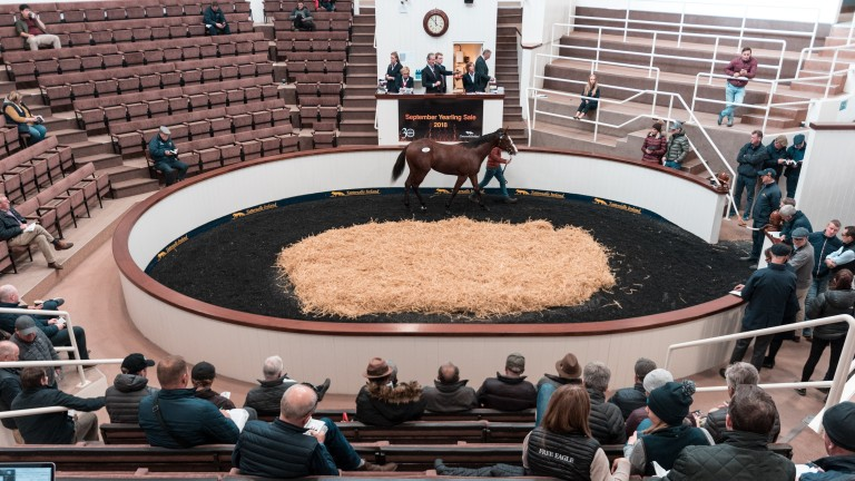 Tattersalls Ireland: a ?32,000 Camacho filly topped Thursday's session