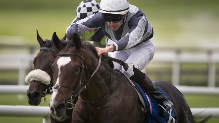 Mount Everest: beat Sovereign in a maiden at the Curragh