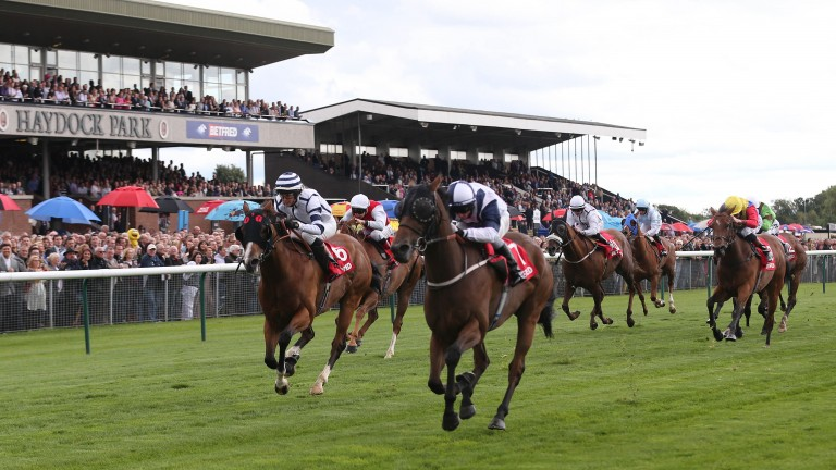 Confessional: Easterby-trained sprinter makes his 131st appearance at Haydock on Saturday