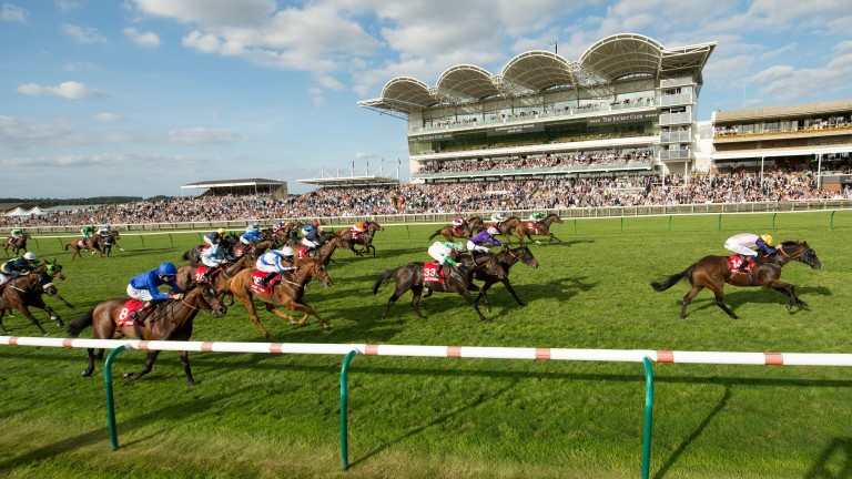 Tricky puzzle: punters will attempt to find the winner of the 35-runner Cambridgeshire on Saturday