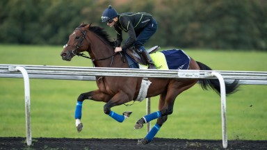 Cracksman (Rab Havlin) exercise twice up Warren HillNewmarket 28.9.18 Pic: Edward Whitaker