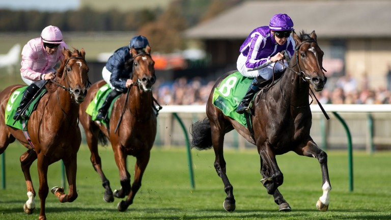 Mohawk: leads home a 1-2-3 for Ballydoyle in the Royal Lodge