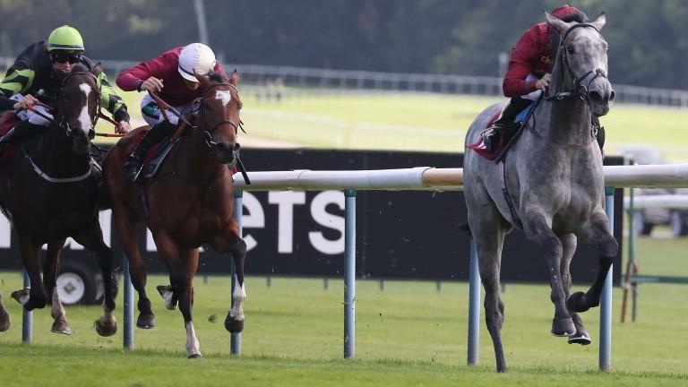 Sparkle Roll: near four-length winner at Haydock on Saturday