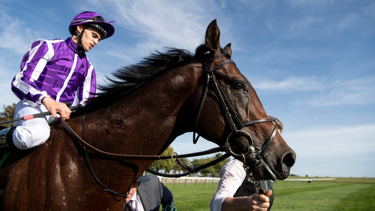 Ten Sovereigns: his yearling sister will be on the market at Tattersalls this month