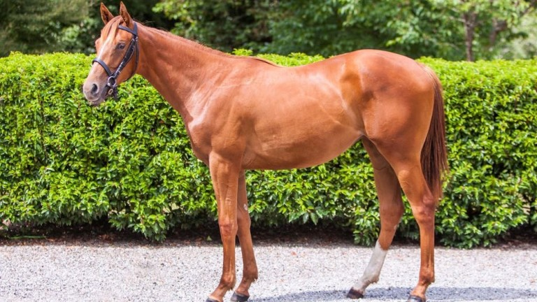 The sister to Tasleet selling at Goffs as lot 203
