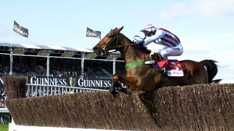 Edredon Bleu: Winner of the 2000 Champion Chase at Cheltenham