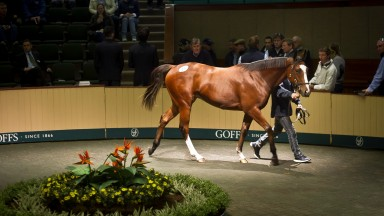 The Goffs Orby Sale starts on Tuesday, followed by the Sportsman's Sale on Thursday