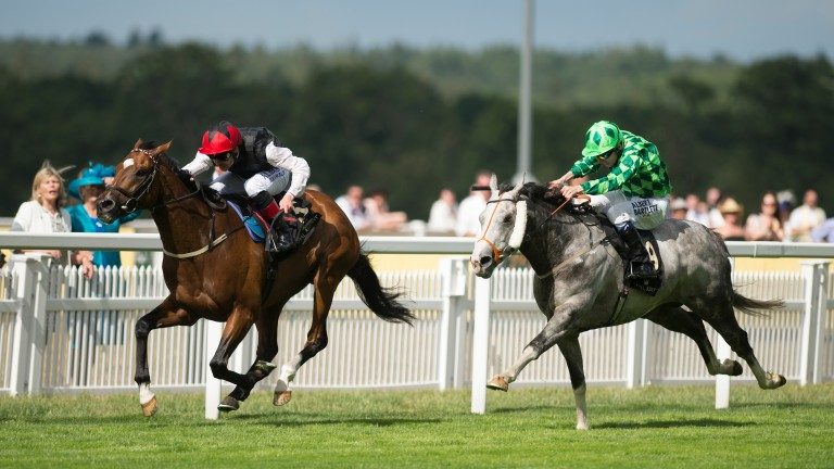 Free Eagle and Pat Smullen beat The Grey Gatsby in the Prince of Wales's Stakes