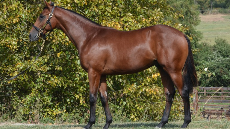 Lot 125: the Dark Angel brother to Heeraat