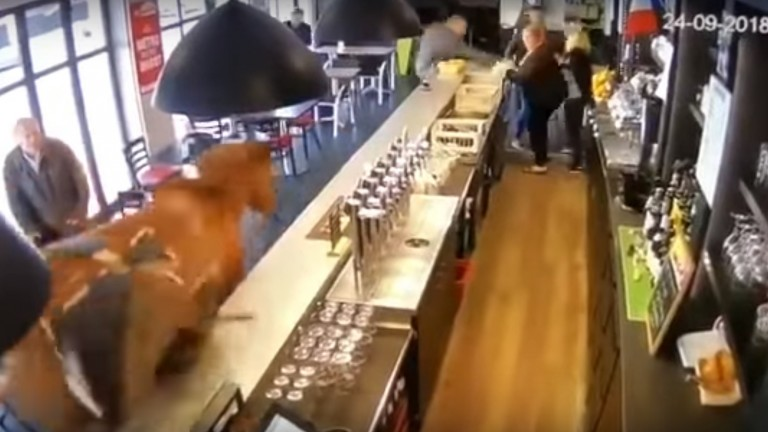 A horse got loose in a bar in Chantilly